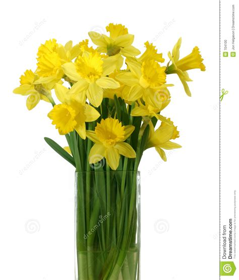 Blue White Vases Daffodils In A Vase Isolated Stock Photo Image 704100