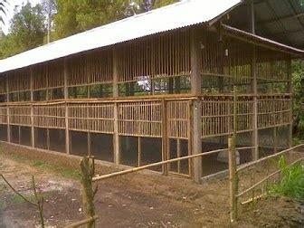 artikel membuat kandang entok panduan membuat kandang ayam kampung