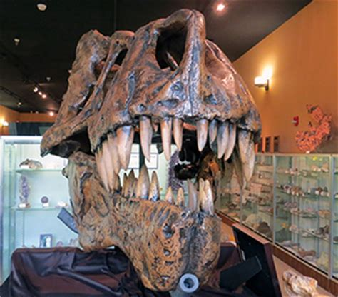 exhibits at the bob campbell geology museum | public
