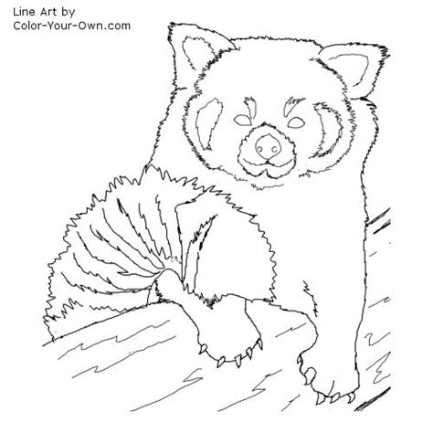 red panda coloring page coloring pages ideas