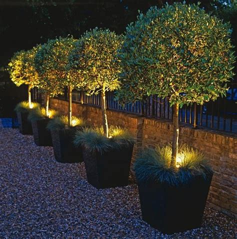 Outdoor Plant Lights How To Choose Outdoor Lighting To Create Focal Points