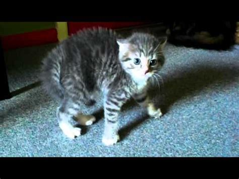 how to comfort a scared cat image gallery scared kitty