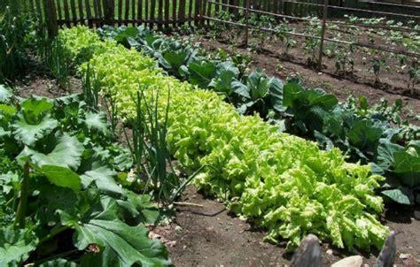 Large Vegetable Garden Photo Png Hi Res 720p Hd Large Vegetable Garden