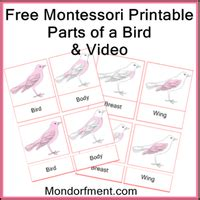printable montessori albums free montessori albums for 6 9 mondorfment