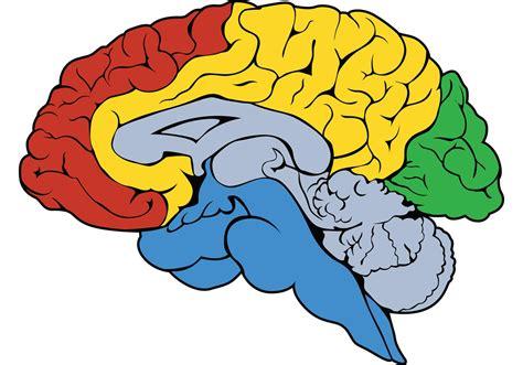 brain clipart brain vector clipart best