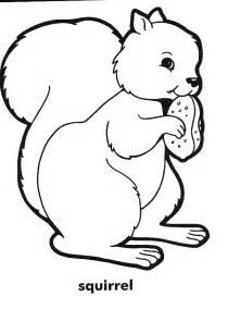squirrel coloring page afunk squirrel coloring books