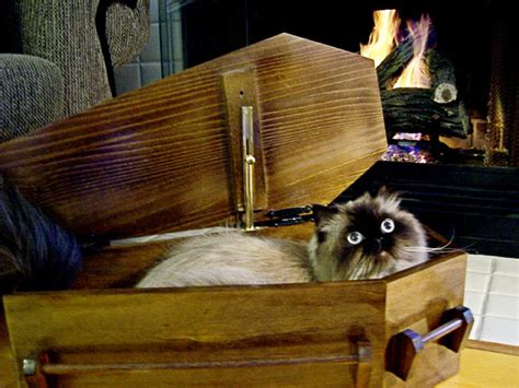 coffin beds catsparella morbidly adorable coffin shaped cat beds