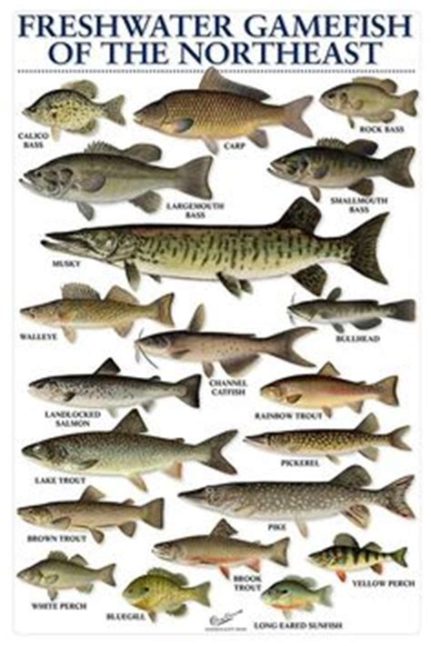 trout, salmon & char of north america ii (females