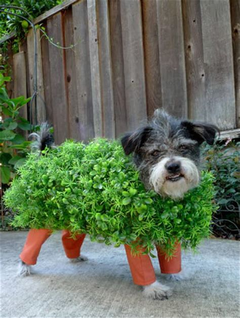 Homemade Costume Ideas For Dogs