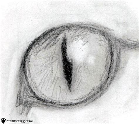 cat eye drawing how to draw a cat eye finalprodigy com