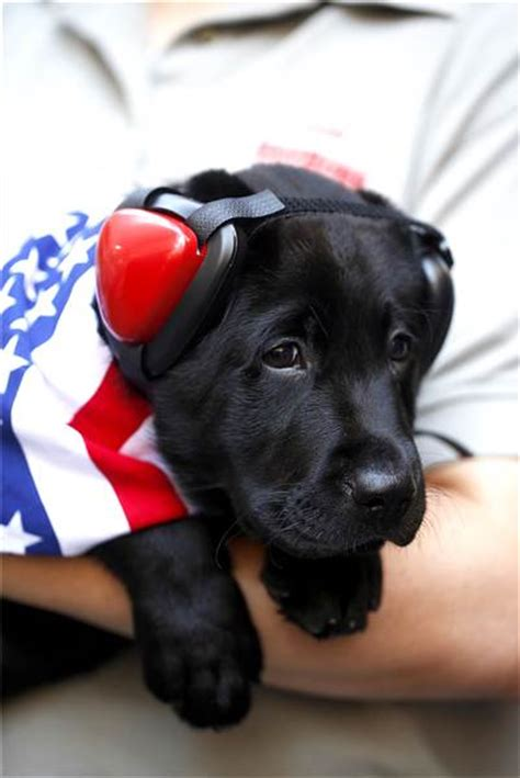 today show puppy he s here vote for the new today show puppy s name today