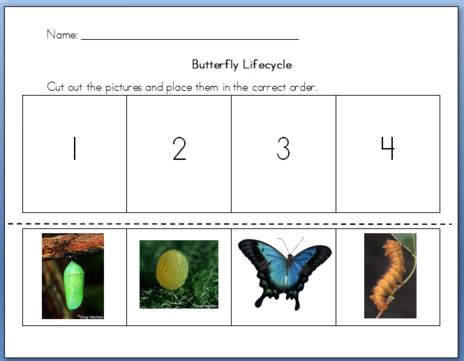 Cycle Of A Butterfly Worksheet For Kindergarten by Cycle Of Butterfly Worksheet Worksheets