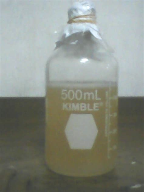 Bibit Bakteri Acetobacter Xylinum bioagrikulturindo makmur starter nata de coco