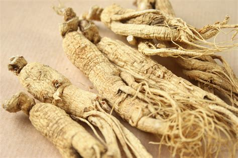 Shoo Ginseng quality ginseng direct white ginseng roots