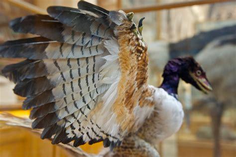 Fossil Es 3755 f 243 ssil de dinossauro asas pode esclarecer rela 231 227 o