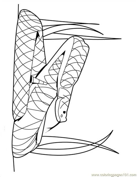 snake coloring page pdf coloring pages snake24 reptile gt snake free printable