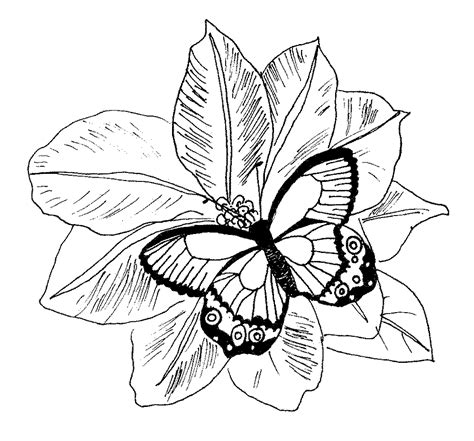 detailed coloring pages for adults flowers coloring pages detailed coloring pages for adults
