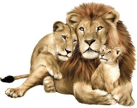 imagenes de leones y sus cachorros comp 211 rtate como un animal unidos contra la apostas 237 a