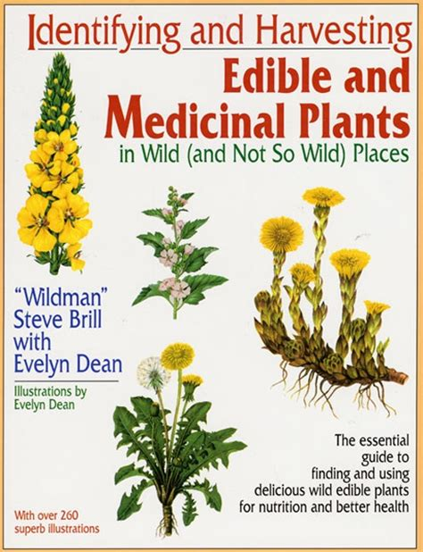edible plants in your backyard 17 best images about medicinal plants wild edibles on