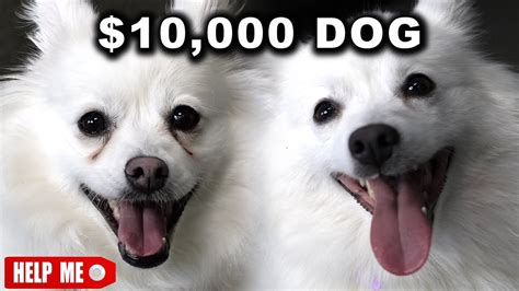 dogs vs dogs 2 10 000 vs 1 bravecto flea