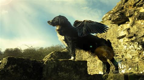 flying puppies withus flying wallpapers hd wallpapers id 6604