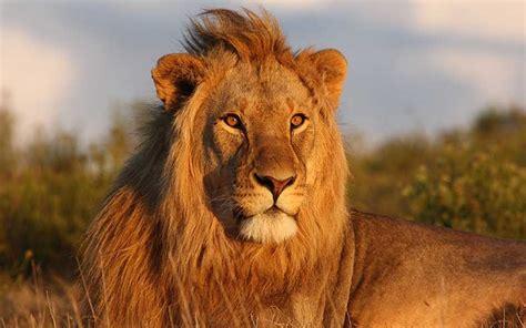 biografia corta de leon x le 243 n informaci 243 n y caracter 237 sticas
