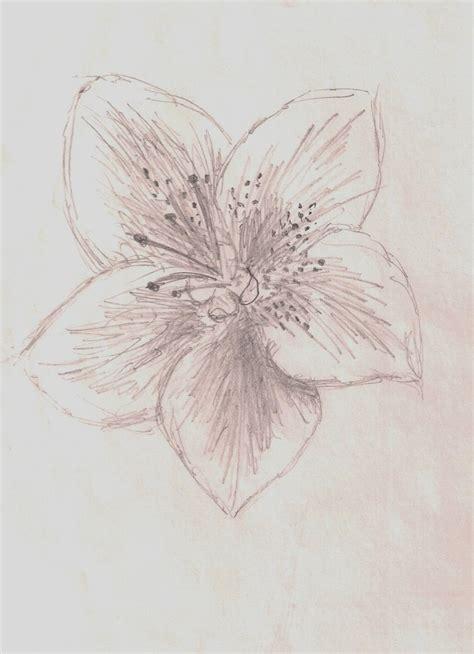 azalea flower by jinxyoung on deviantart
