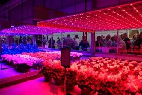 led lights reduce energy consumption led lighting can significantly reduce greenhouse