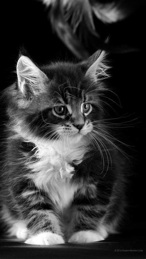cat wallpaper vertical 1080 x 1920 kittens full hd 1080x1920 wallpaper photo