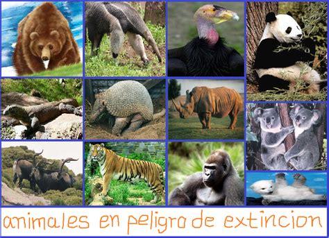 libros sobre animales en peligro de extincion pdf extincion de los animales animales en peligro de extincion