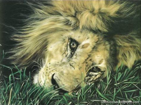 Coolfunclub Realistic Animal Paintings Animal Painting For