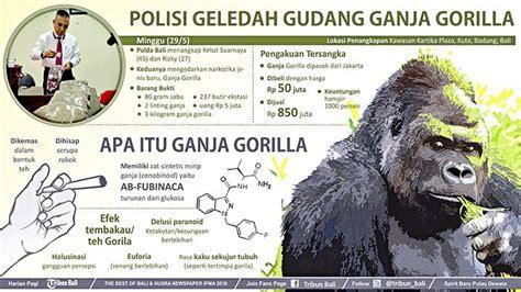 Timbangan Berat Badan Di Pontianak waspada ganja dan tembakau gorila masuk bali efeknya
