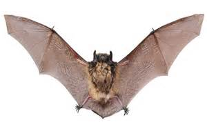 Bats In A Guide To Dealing With Bats In The Attic Onthemarket
