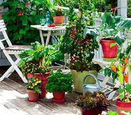 kitchen gardening ideas how to start a balcony kitchen garden complete guide