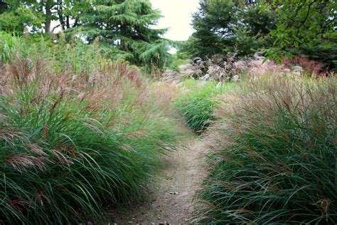 glorious goodnestone part ii graceful grasses the