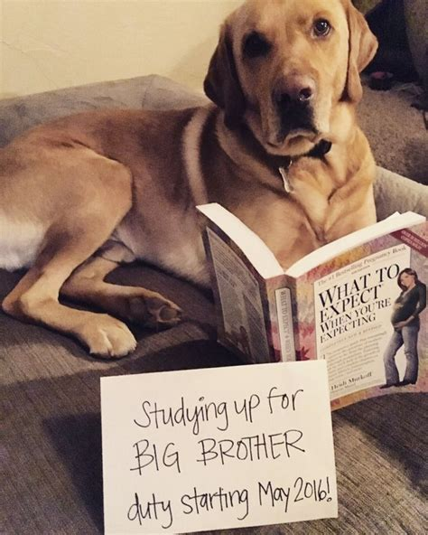 pregnancy announcements with dogs 25 best ideas about pregnancy announcement on pregnancy announcement