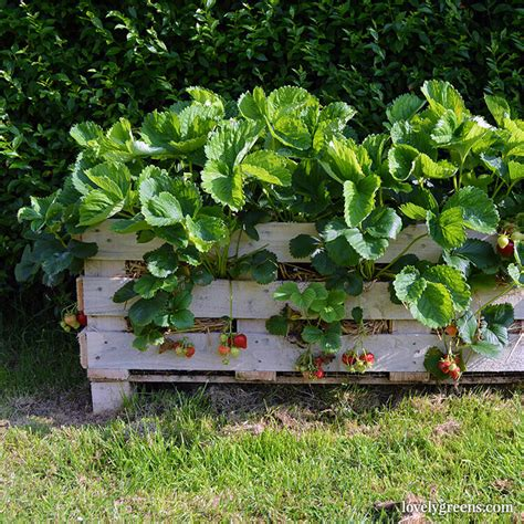 Creative Strawberry Planters by Creative Ways To Decorate With Pallets The Creative