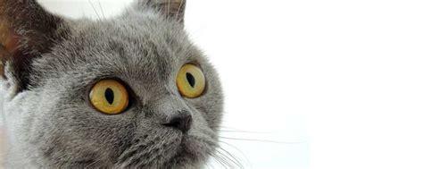 cat diarrhea home remedy weve  em