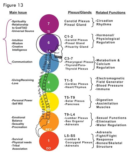 chakra color understanding chakras 226 vortex energy 187 paul chek s