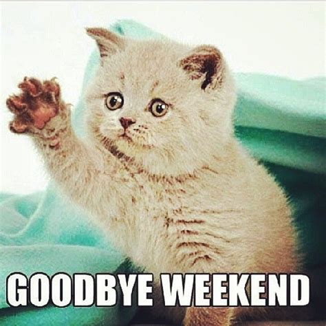 Goodbye Cat Meme - mondayfeels compute info