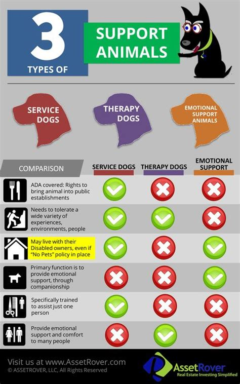 emotional support certification best 25 anxiety ideas on dogs with anxiety puppy anxiety and