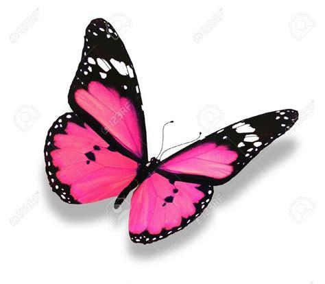 Fun In The Bedroom Ideas 25 Best Pink Butterfly Ideas On Pinterest Butterfly