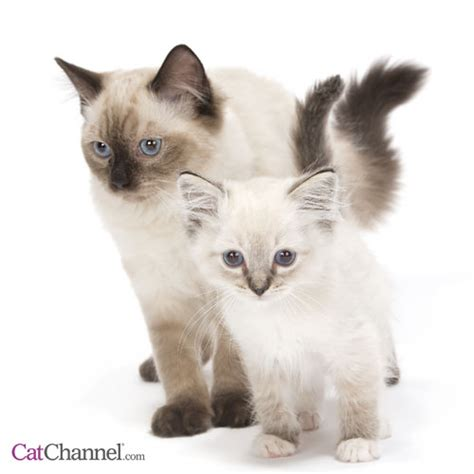 and cat pictures images of cats and kittens houses pictures
