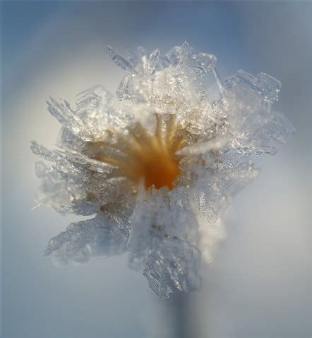 ice flower: inta: galleries: digital photography review
