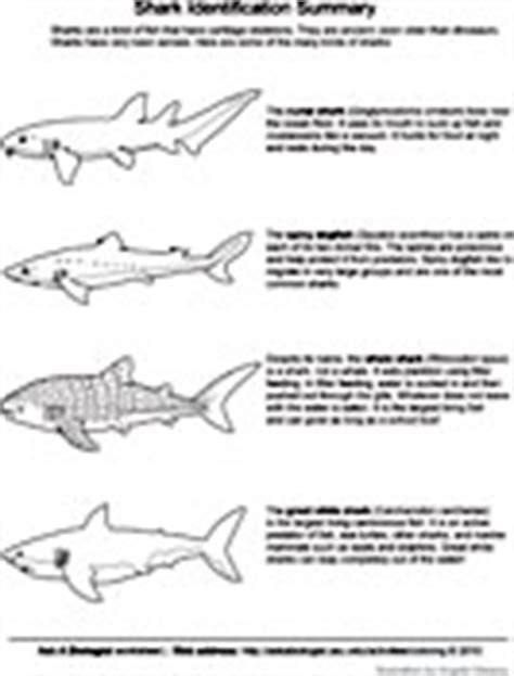 shark anatomy coloring page biology coloring pages worksheets asu ask a biologist