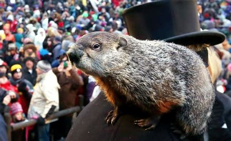 groundhog day live today marks the 131st annual groundhog day 98 7 the bull
