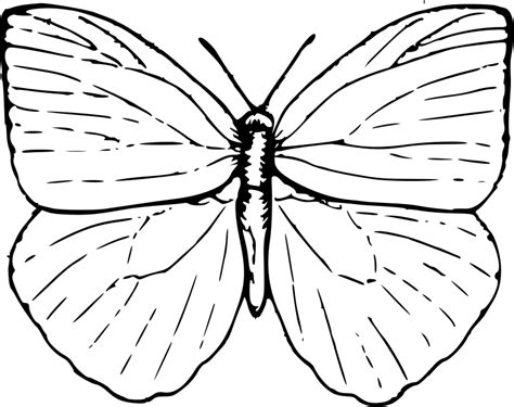 color pictures of butterflies butterfly coloring pages coloring pages to print