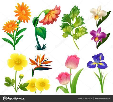 alle verschillende bloemen verschillende soorten wilde bloemen stockvector