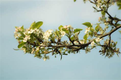 foto con fiori bellissimi ramo con bellissimi fiori scaricare foto gratis