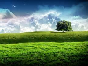 new bliss tree green landscape scenery wallpaper free
